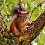Les écureuils vous attendent !